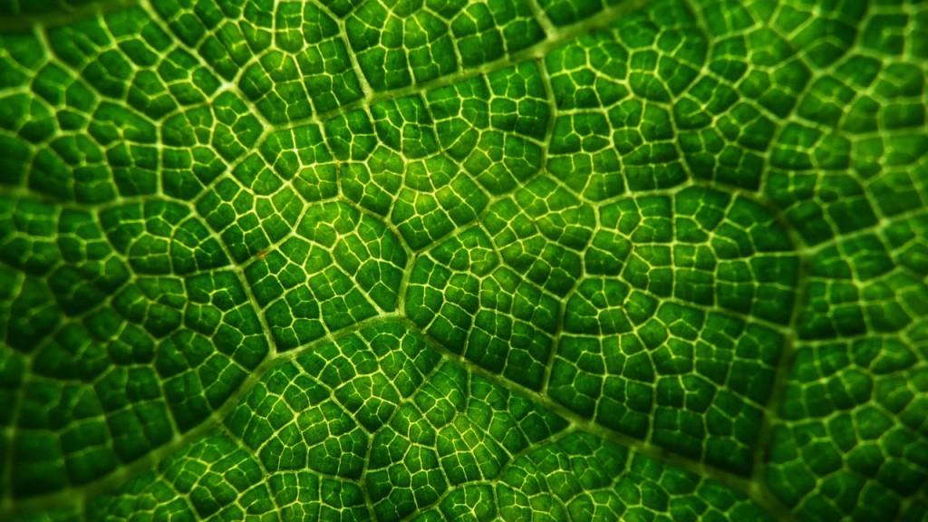 leafy-21027_1280